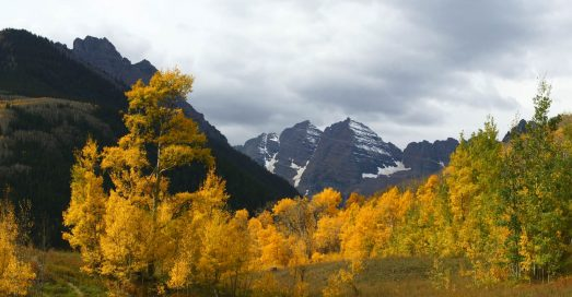 Foliage in the mountains of Aspen